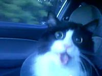 瞳孔開きっぱなし。人間用の中枢神経刺激薬を食べちゃったネコちゃん・・・。