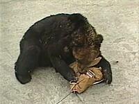 3人の若い命が奪われたヒグマ襲撃事件 福岡大学ワンダーフォーゲル部
