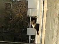 このネコに勝てる気がしない。ネコが本気を出すとこんな事もできちゃう動画
