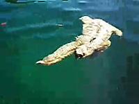ちょっと和んだwwただ流されてるだけに見えるけど本人は必死に泳いデル
