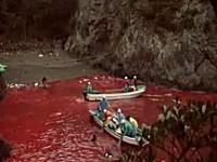 血で染まる海 和歌山県で行われているイルカ漁を撮影した映像