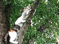 ママ大変すぎる(*´Д`)木に登ってしまった子猫を救出に向かうママ猫(*´Д`)