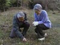 貴重映像 天皇皇后両陛下の平日 野蒜を見つけて「酢味噌でね・・・」
