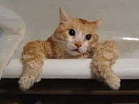 バスタブから逃げ出そうとパニック状態になっている猫を見て大笑い・・・。
