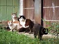 ネズミの大逆襲。一匹のネズミにびびりまくるネコの集団wなんかワロタw