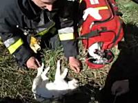 火災現場で発見された意識不明のニャンコが消防士に助けられるビデオ。