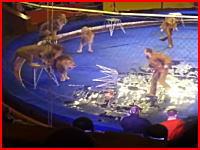 会場大パニック。サーカスのライオンが突然調教師を襲いだす衝撃映像