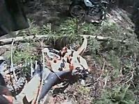 林道ツーリングをしていたら木が倒れてきて下敷きになってしまうハプニング