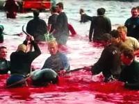 血で染まる海 欧米のイルカ漁と捕鯨の動画、画像集