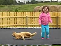 ネコ「トランポリンの上で昼寝していたら幼女が飛び跳ねだして困ったニャン」