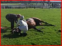 競馬動画。レースを終えた直後のお馬さんが心臓発作で倒れる⇒安楽死に