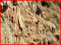 崖飛び込み失敗で岩肌に激突してしまう危険なアクシデントの映像。怖すぎる