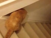 階段のスロープを利用した一人遊びを覚えたニャンコ。運動不足解消イイ。
