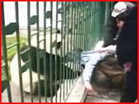 人間が動物に襲われてしまう衝撃映像TOP15。ショッキングな映像あり注意