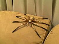これは酷いwww上から大きな蜘蛛が落ちてくるイタズラに大びっくりwww