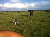 野生の象にまで迷惑をかける酔っ払い。酔って野生の象に戦いを挑む男性