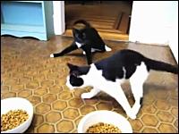 薬が効いていてまともに歩くことが出来ない猫たち。でも腹ペコなんです。