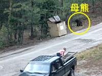 ゴミ箱に閉じ込められていた3匹の小熊を救う方法。これは良いビデオ。