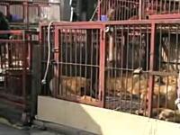 韓国の食用犬市場。カゴに入れられ食べられるのを待つワンコたち・・・。