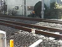 あっぶねー!危機感の無さ過ぎるニャンコ、電車が迫ってきても動かないw