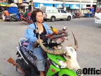タイに突っ込みどころが満載なおばちゃんがいた。鳥の散歩かっけえ動画。