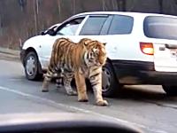 ロシアでは道路で出会う野生動物までもがおそロシア。かっけえwwwww