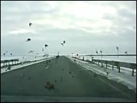 鈍い音が・・・。大量の小鳥と衝突してしまった車のドライブレコーダー映像。