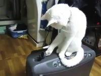 蓋を開けたらパタリとニャンコ。白猫と僕の根気比べ。これは可愛すぎwww