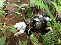 ヘビに巻きつかれて食われそうになっている所を助けられた猫。ボアコン