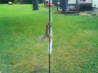 バードフィーダーの餌をリスが狙うのでワナを仕掛けたら面白い映像が撮れた