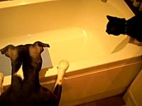 このイヌ極悪すぎるwww湯船で犬に突き落とされてパニックになる猫(´・_・`)
