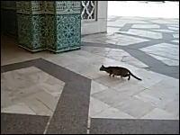 床が滑ってトラクションが掛からないネコ。それでもトリをゲットする運動神経