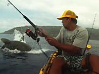 この焦りっぷりwwwカヤックフィッシングでサメに登場されたらコワイだろwww