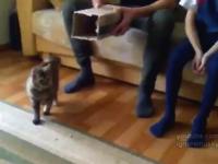 ネコは箱が空中にあっても入りたがる動画。ジャンピング箱インニャンコ。
