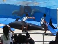 これは珍しいハプニング。水族館のイルカが水槽から飛び出してしまった!