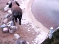 動物園のゾウさんが何かを拾って食べた直後に内部から爆発して即死。