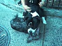 これは最悪。散歩中のピットブルが他人の小型犬を噛み殺そうとする(((゚Д゚)))