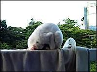 ネコが土下座しながら寝ていたから撮影してみたwww これはワロタwww