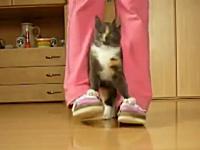 猫も訓練すればここまで出来るようになる。多くのワザを教え込まれたネコ。