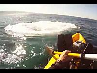 海でカヤックを楽しんでいたら巨大なシロナガスクジラがデテキタ━(゚∀゚)━!