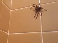 ビビるなら余計な事するなwwwバスルームに現れた蜘蛛に負けた男。
