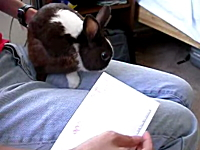 「噛み噛み噛み噛み」激萌え動画。 ウサギさんのレターオープナー