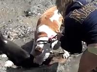 カリフォルニアのビーチで犬がアシカの赤ちゃんをかみ殺す。その飼い主が・・・。