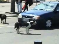 DQN犬w 「プップー」車のクラクションにムッとしたワンコが取った行動w