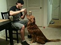 忠実すぎるバランス犬が可愛い動画。頭の上にお菓子が36個も乗るよ!
