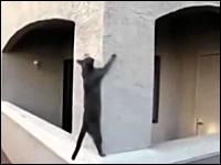 忍者かよ。身体能力が高すぎるネコたちの映像集(4猫)。ニャンジャだった。