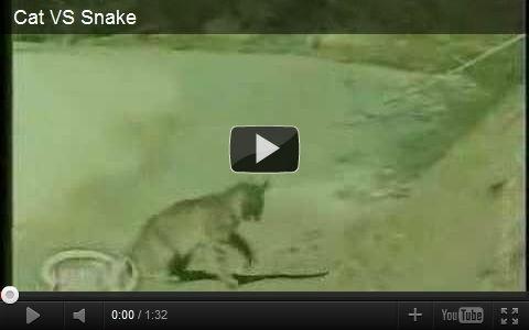 ネコ vs ヘビ ネコパンチ最強動画