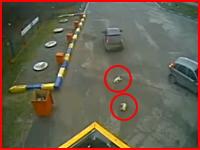 これはきっつい(@_@;)目の前のワンコに気づかずに出発してしまう車・・・。