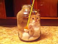 ニャンコでにやけるニタニタ動画。自らビンの中に入っちゃったネコが可愛い。
