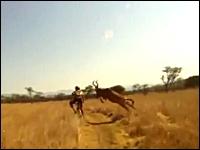 MTBレースで野生生物の頭突きを食らってしまう選手の映像。ヘルメットカム